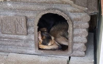 Esperanza taking a nap